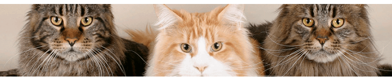 Discus Sklep Zoologiczny | KOTY