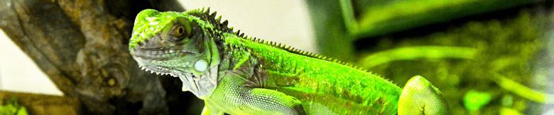 Discus Sklep Zoologiczny | TERRARYSTYKA