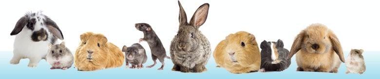 Discus Sklep Zoologiczny | GRYZONIE