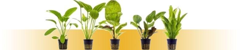 Żywe Rośliny