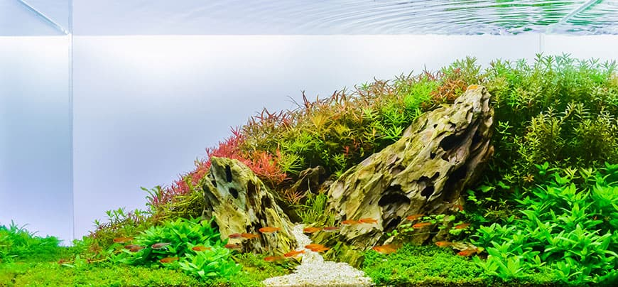 Rozmieszczenie korzeni i kamieni w akwwarium
