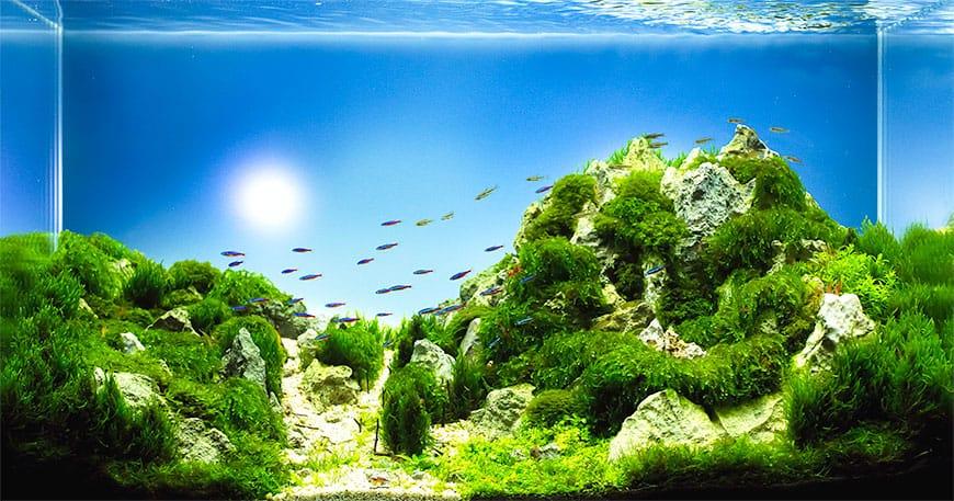 Jak barwa oświetlenia do akwarium