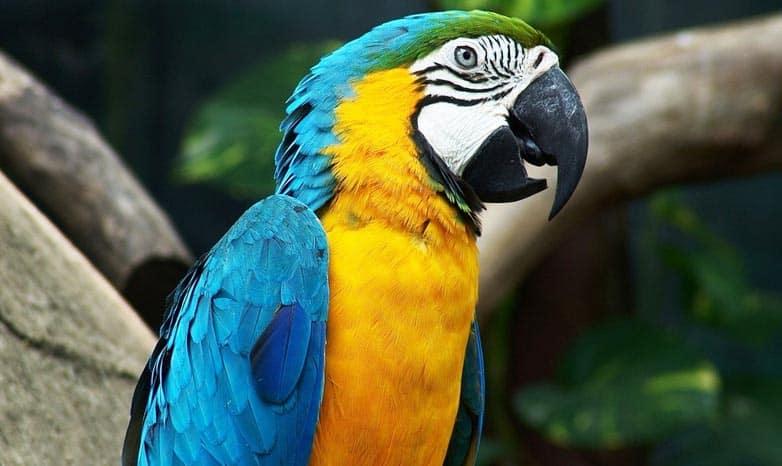 Jak wybrać papugę do domu?