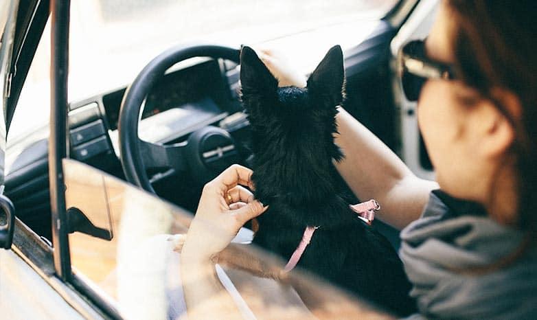 przewożenie psa w samochodzie.jpg