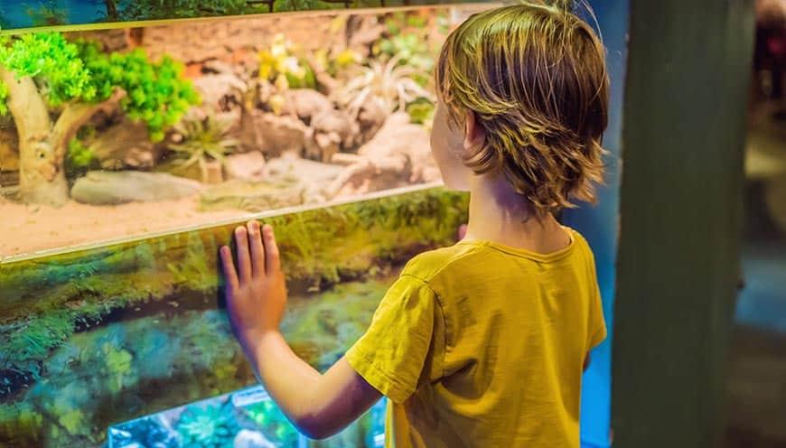 wąż zbożowy terrarium