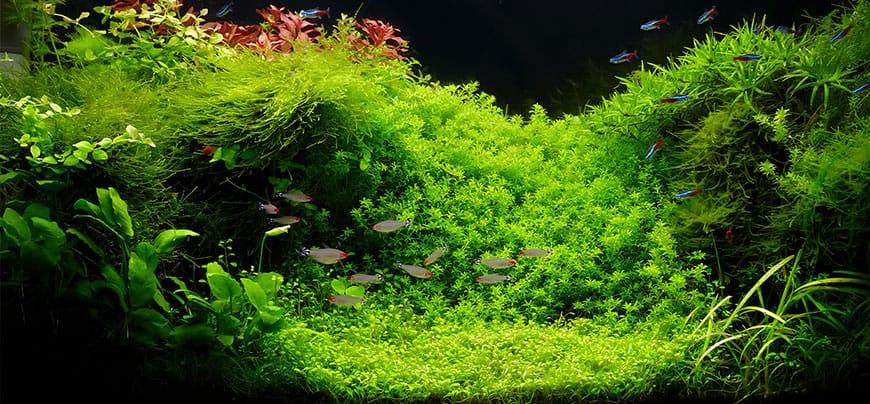 Tło w akwarium - efekt głębi