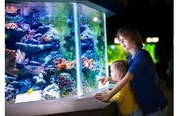 Dlaczego warto mieć akwarium, jego wpływ na zdrowie człowieka.