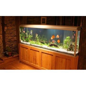 Zakładanie akwarium - na co zwrócić uwagę