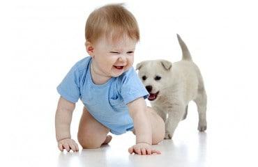 Jaki pies dla dziecka?