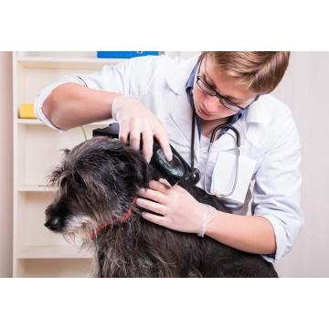 Kleszcz u psa - zapobieganie ukąszeniom kleszcza