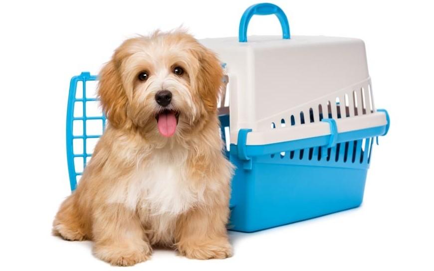 Przewożenie psa w samochodzie - pasy lub klatka dla psa