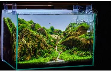 Jak stworzyć w akwarium poczucie głębi? Dobór podłoża, tła i oświetlenia