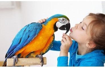 Jak oswoić papugę - oswajanie papug falistych