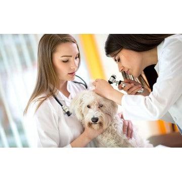 Alergia u psa objawy alergii skórnej i pokarmowej