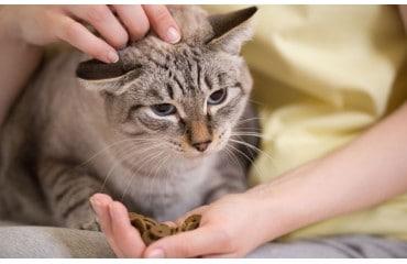 Co zrobić, gdy kot nie chce jeść?